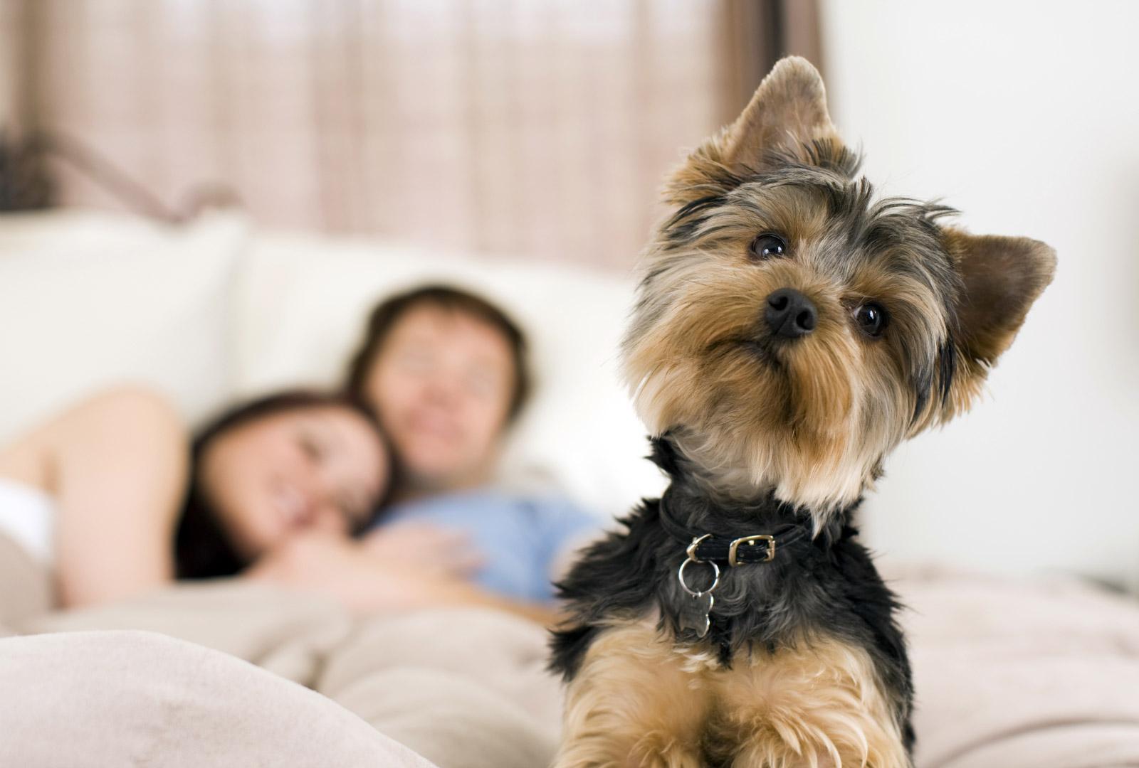 Algumas dicas para cuidar do seu pet no apartamento